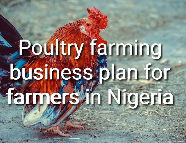 Poultry farming business plan for farmers in Nigeria