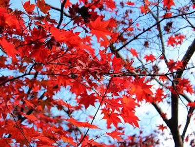 八坂神社の紅葉