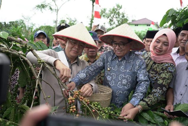 gubernur bengkulu memetik dan memanen kopi