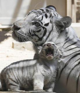 Fotos de animales divetidas y tiernas.