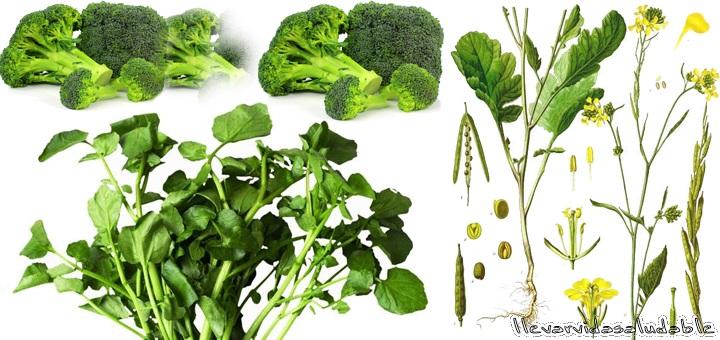 9 alimentos verdes para mantener un cuerpo sano