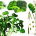 9 alimentos verdes para mantener un cuerpo sano, parte 1/2