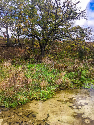 Pheasant Branch Conservancy Middleton WI