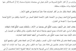 امتحان تشخيصي لمادة اللغة العربية للصف التاسع