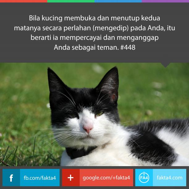 Mata Kucing Berkedip Lambat