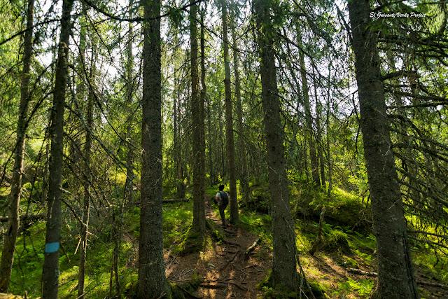 Sendero de Jevnaker - Noruega, por El Guisante Verde Project