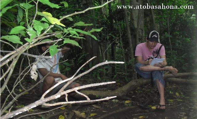 Pengertian Inventarisasi Hutan Terbaru