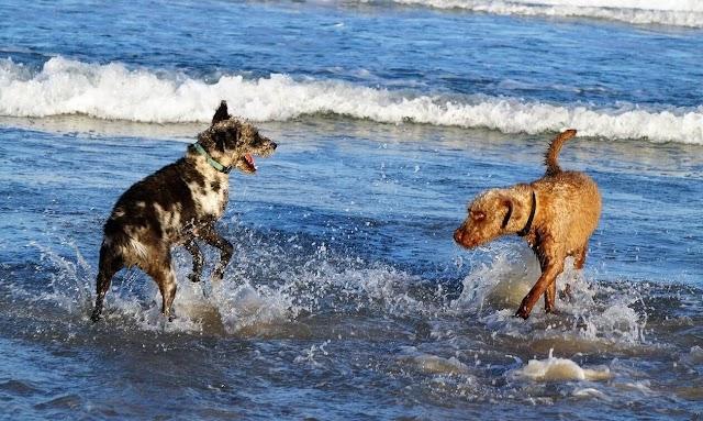 Νομοσχέδιο για δεσποζόμενα και αδέσποτα: Τα κενά και οι ελλείψεις για παραλίες και παιδικές χαρές