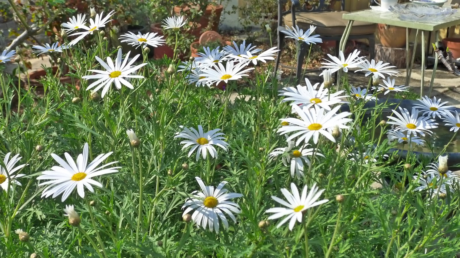 Lavender Vanilla Friends Of The Gardens September 2017