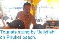 https://sciencythoughts.blogspot.com/2018/10/tourists-stung-by-jellyfish-on-phuket.html