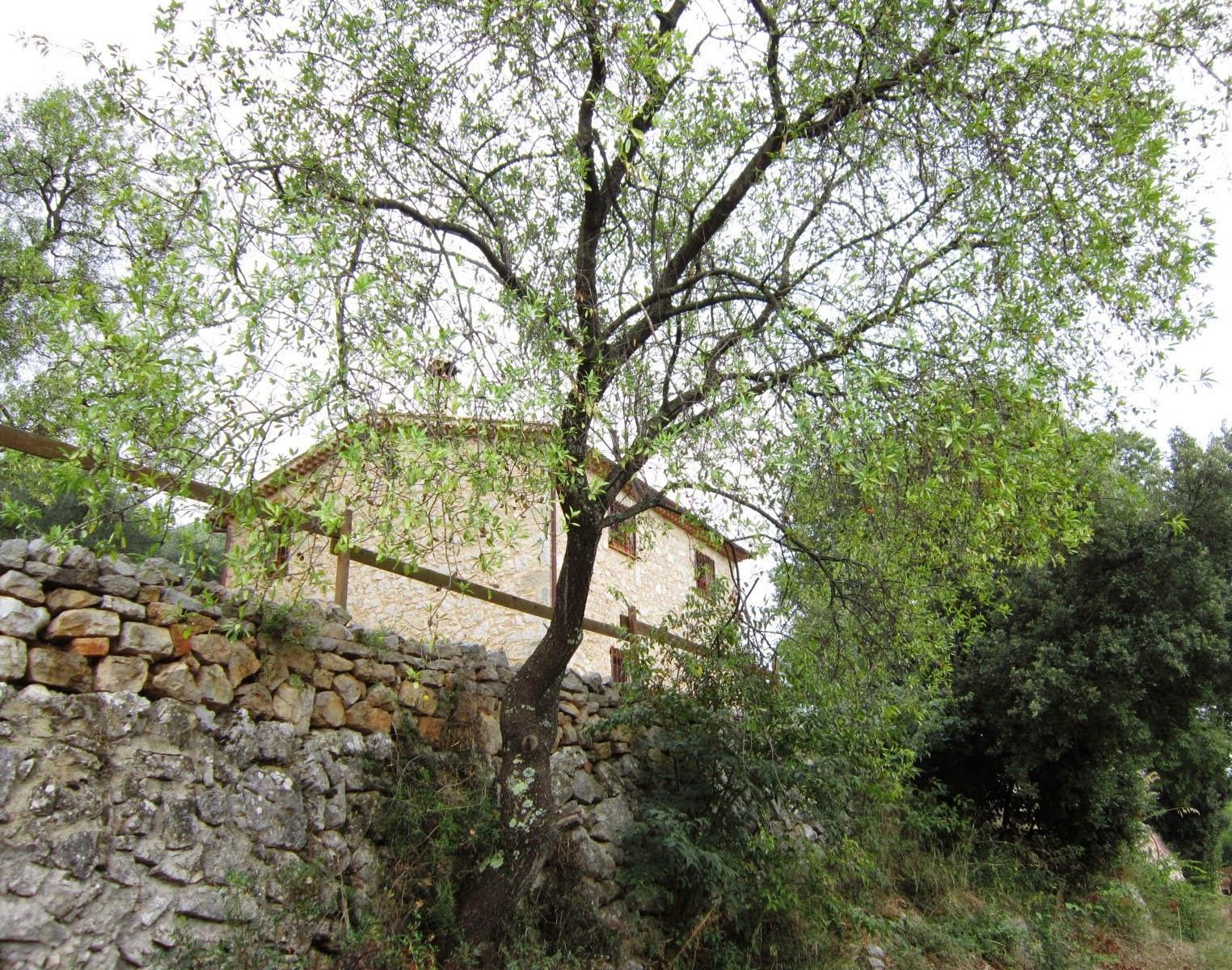 Franca rita l 39 uliveto le mandorle e la mantolata for Case vecchie ristrutturate