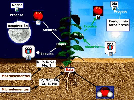 pasos de la fotosintesis