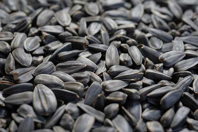 Sunflower seeds boost your immune system