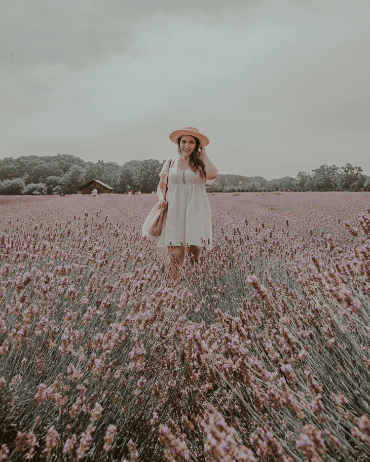 Lavender by the Bay, Long Island New York - Lavender by the Bay Season - Lavender by the Bay Tickets - Lavender Farm - Lavender by the Bay Best time to visit
