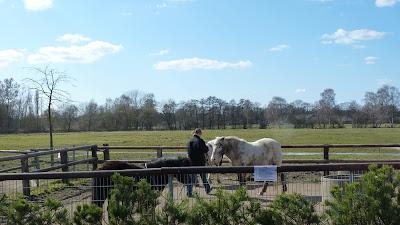 Ponys, Ponyhof, Reiterhof für Kinder, Hamburg