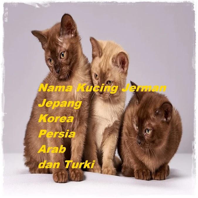 Nama Kucing Jerman, Jepang, Korea, Persia, Arab, dan Turki
