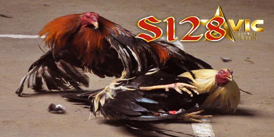 ayam bangkok suro