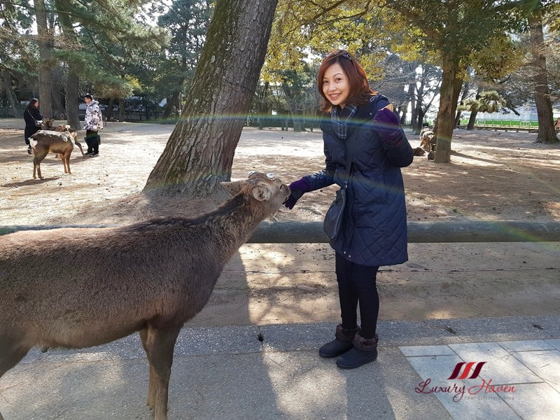 be greeted by countless deer in nara park