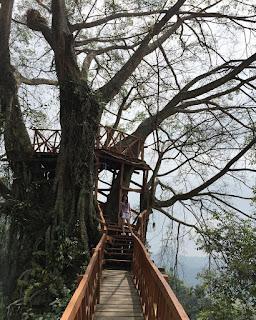 Rumah Pohon Dan Jembatan Kayu Gantung Jonggol