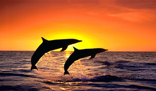 HOW DO DOLPHINS SEE WHAT THEY CAN'T SEE?