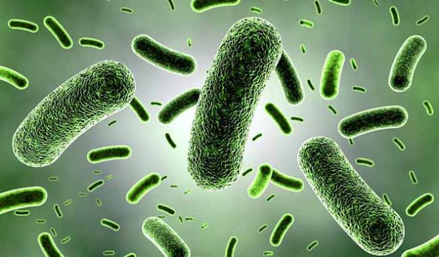 Are Your Nursing Assistants in the Know About Drug Resistant Bacteria.www.kaise-hoga.com.jpg