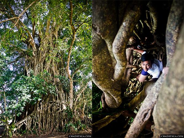 climbing, balete tree, Baler, Itinerary, Surfing, Sabang Beach, Pacific Waves Inn, Travel, Aurora, Philippines