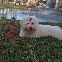 evitar el sindrome de perro pequeó
