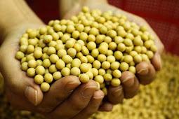 5 manfaat kacang kedelai bagi kesehatan