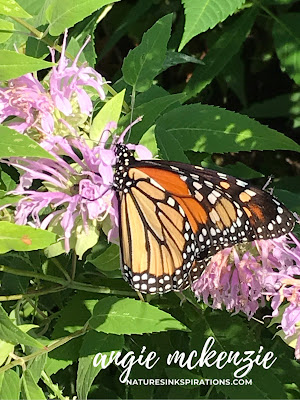 Inspired by Nature | Monarch posing for me during my morning walk!