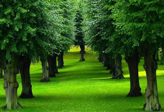 Curiosidades de los árboles-TuParadaDigital