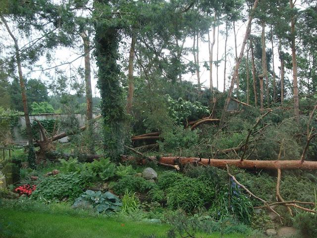 zniszczony ogród