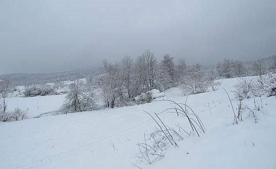 Dolina Wisłoka.