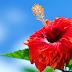 Oração Kahuna do Perdão - 21 Dias de Oração - Perdoe e seja mais feliz! 🙏