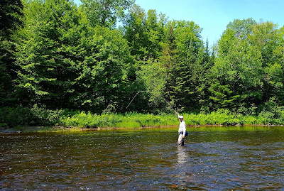 Dry Fly FIshing on the Diable River