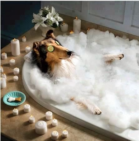 Funny dog beauty treatment spa with candles and bubbles
