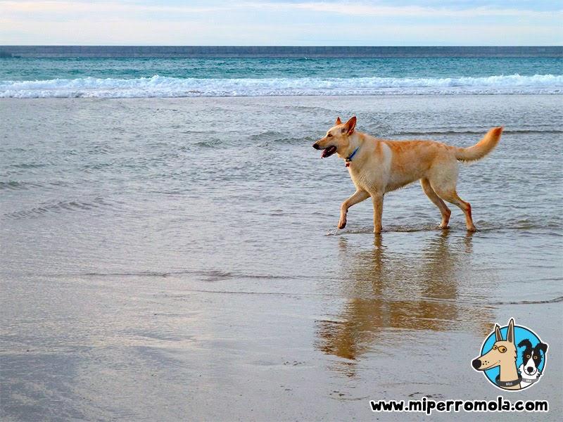 Can de Palleiro en la Playa de Sabón