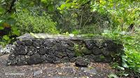 Philodendron creeping on stones - Waimea Valley, Oahu, HI