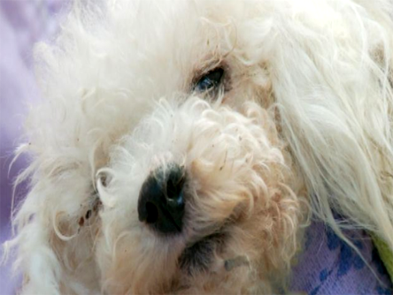 Four legged friends (and enemies): Dog burned, left for dead in