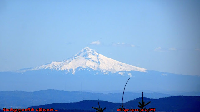 Mt Hood View from Kings Mountain