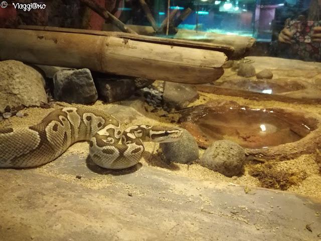 Uno dei serpenti ospiti al Rettilario di Leolandia