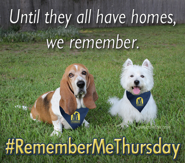 The Bayou Boys are joining the world for #RememberMeThursday