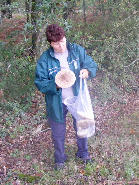 Foraging for Parasol Mushrooms Macrolepiota procera. Indre et Loire, France. Photographed by Susan Walter. Tour the   Loire Valley with a classic car and a private guide.