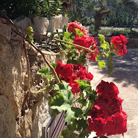 Geranien in mediterranem Garten