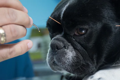 Alternative Veterinary Medicine For Your Pet