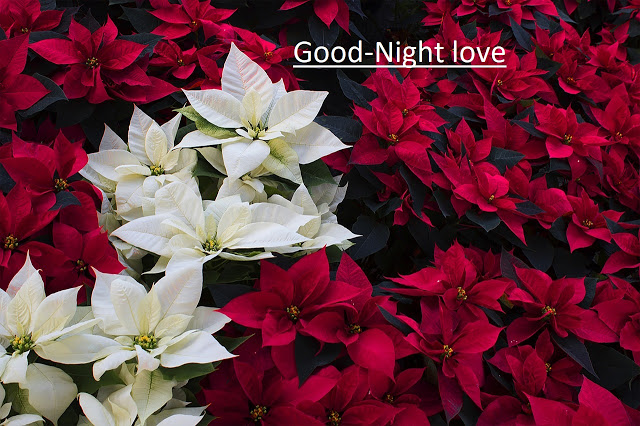 Today we are going to Share Best Shayari on Good Night 2020, Good Night Shayari in Hindi, Sad Shayari on Good Night, Shayari on Good Night.