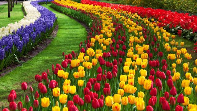 Harga Masuk Kebun Bunga Cihideung