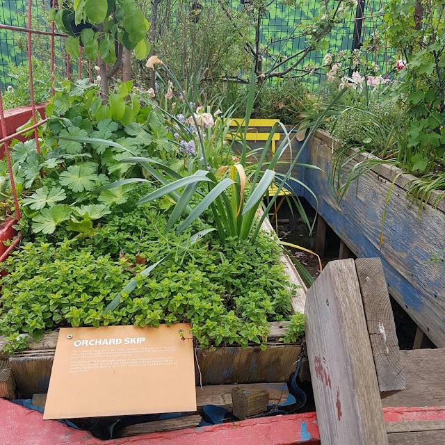 the skip garden london kings cross