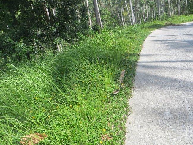 зеленая трава вдоль дороги