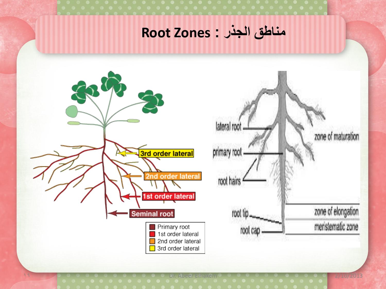 كتاب مورفولوجيا وتشريح النبات