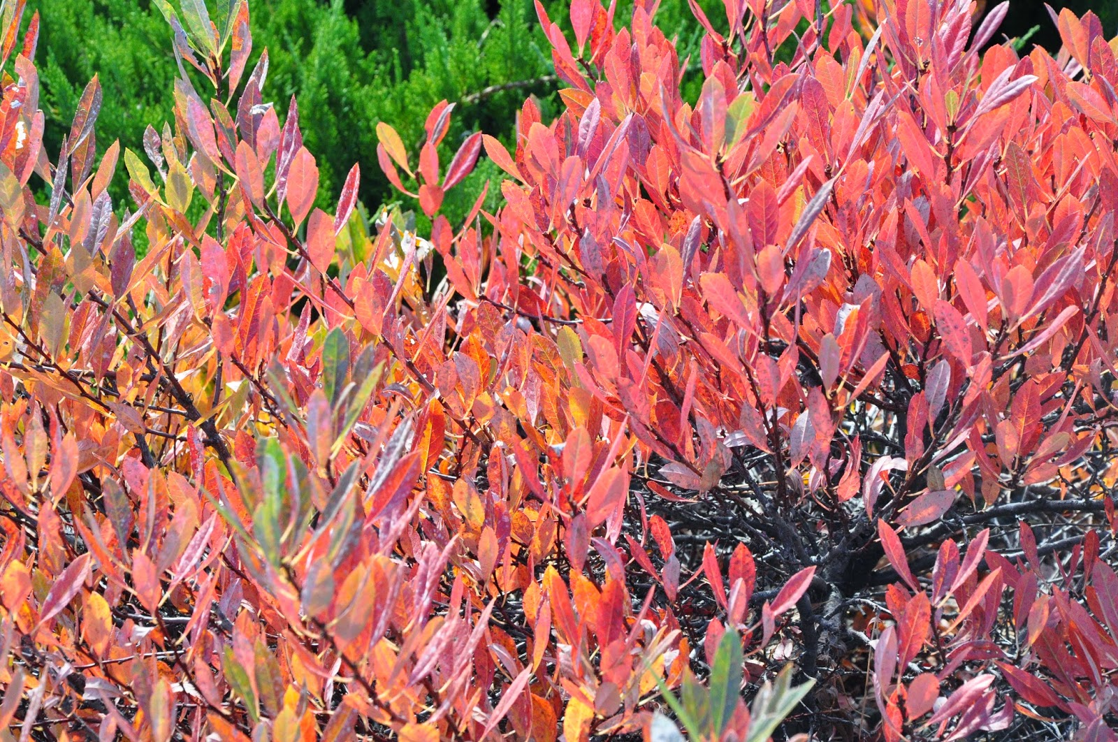 Co Horts R I P 2014 Fall Color